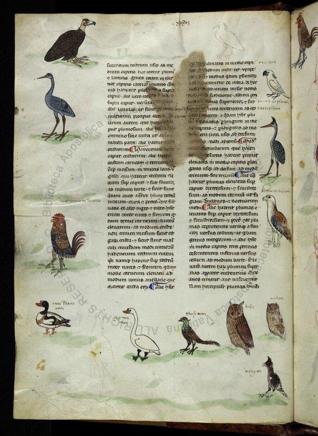 Фото №1 - Когда в Европе узнали о какаду