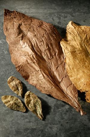 Фото №3 - Табак и пачули: самые загадочные ноты в составе ароматов