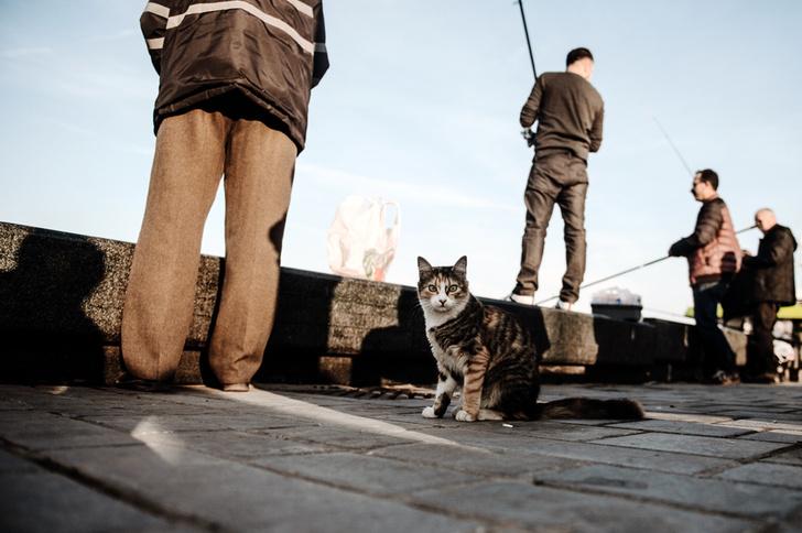 Фото №8 - Короли улиц: настоящие хозяева Стамбула