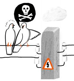 Фото №1 - Почему севшую на провод птицу не убивает током?