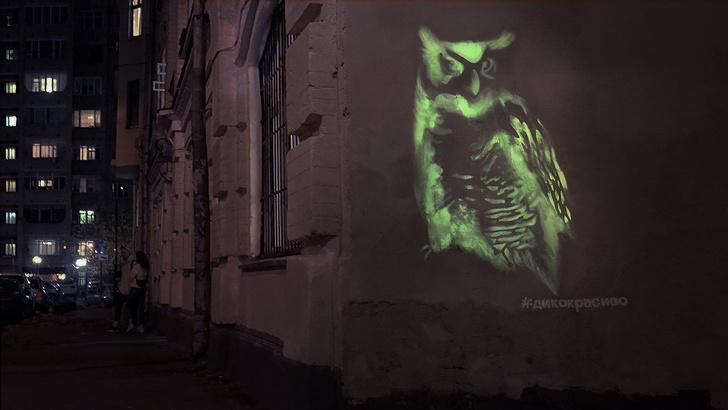 Фото №1 - На улицах Москвы замечены дикие животные