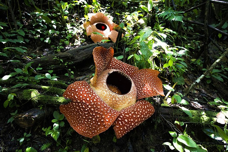Фото №2 - Выросло так выросло: самое большое живое существо и еще 5 растительных рекордов