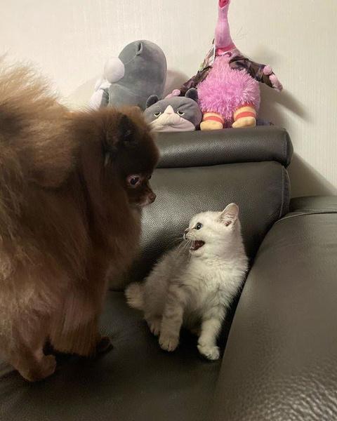 Фото №4 - Cat lover: у Лисы из BLACKPINK появился пятый котик 😺