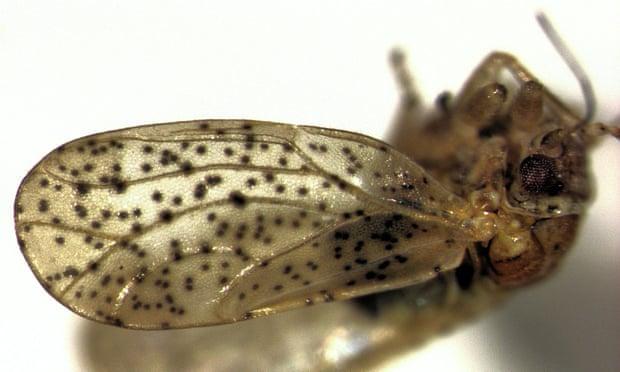 Фото №1 - В честь Фродо Бэггинса назвали новый вид насекомых