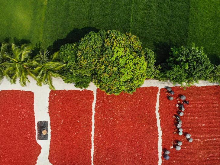 Фото №1 - Зеленое и красное