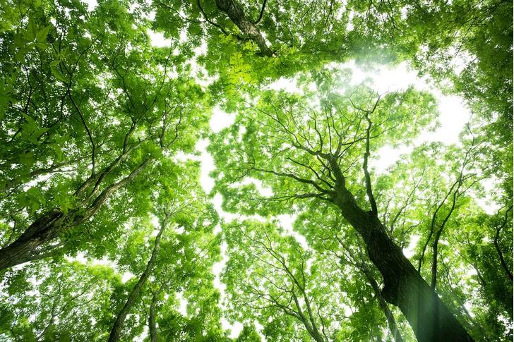Фото №1 - Здравствуй, дерево! Тайная жизнь растений