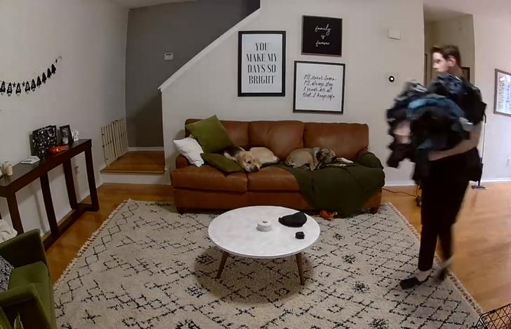 Фото №1 - Видео с собакой, которая помогла хозяину со стиркой, набрало больше 8 миллионов просмотров