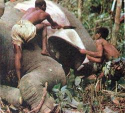 Фото №2 - Мальчик с пальчик из леса Итури