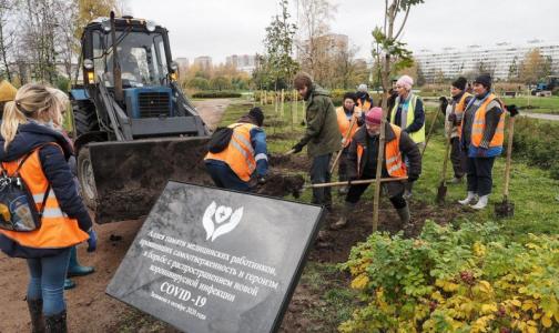 Фото №1 - В память о погибших от коронавируса медиках в саду Прометей посадили краснолистные клены