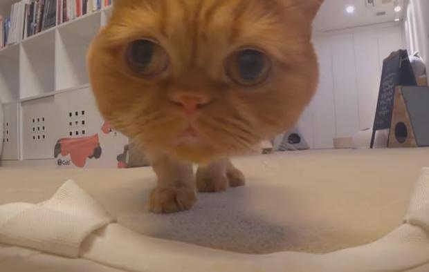 Фото №1 - Хозяйка решила выяснить, кто из ее семи котов распотрошил сумку, и поместила в нее скрытую камеру (видео)