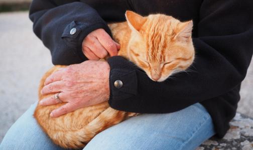 Фото №1 - Мой кот меня бережет: Интернет-пользователи рассказали, как их лечили питомцы
