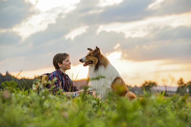 Фото №4 - Лесси: 6 фактов о самой известной собаке в кино