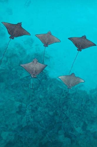 Фото №31 - Пять причин провести каникулы в отеле Joali на Мальдивах