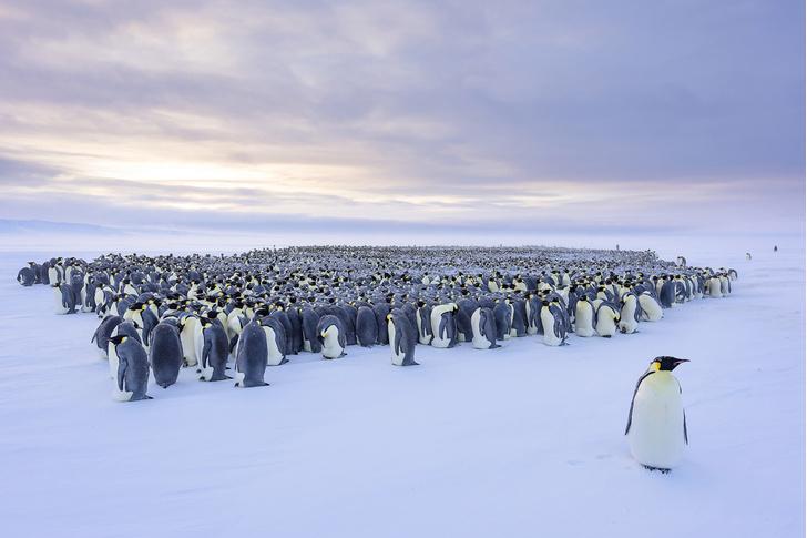 Фото №4 - Зима, холода: какими способами выживают обитатели полярных широт
