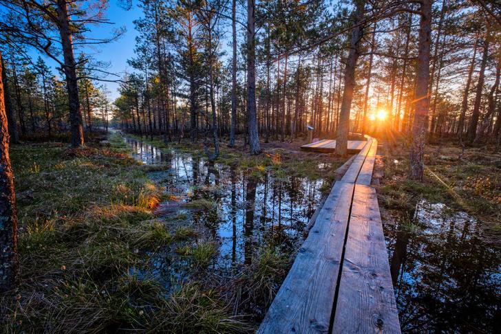 Фото №1 - Во славу Солнца: как отмечают день летнего солнцестояния в Латвии