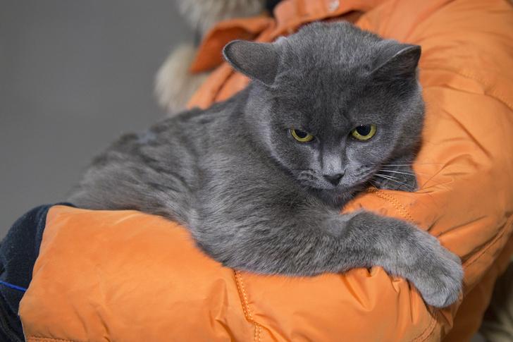 Фото №4 - Котопёс недели: возьми из приюта кота Барри или пса Ючи