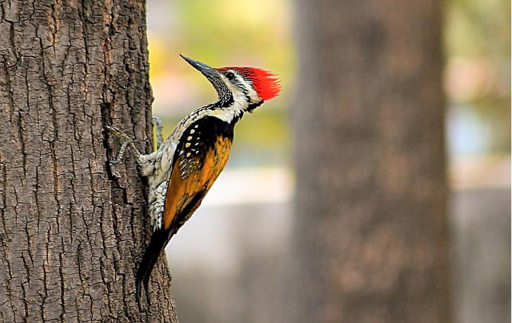 Фото №1 - По ком стучит дятел: 6 занимательных фактов о лесных птицах