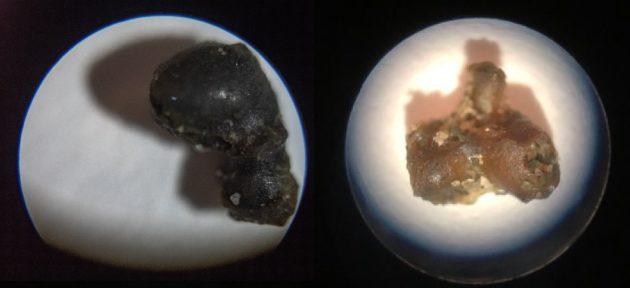 Фото №1 - Обломки метеорита впервые подняли со дна океана