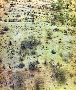 Фото №3 - Могикане Восточной Африки