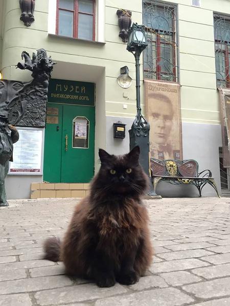 Фото №1 - В Москве из музея Булгакова украли кота Бегемота