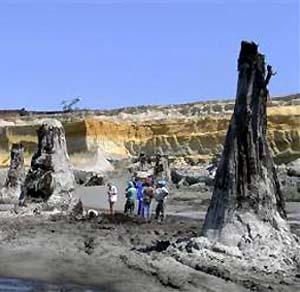 Фото №1 - В Венгрии откопаны доисторические кипарисы
