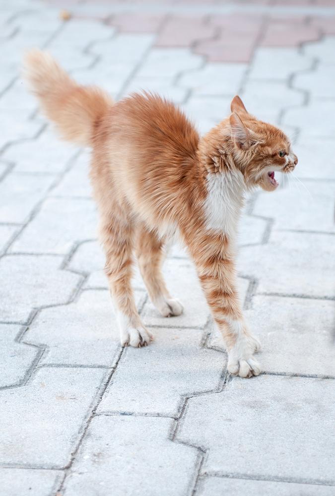 Фото №1 - Ветеринары рассказали, как избавить кошку от стресса