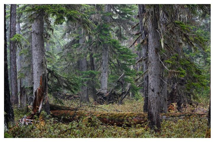 Фото №2 - ВОКРУГ СВЕТА - партнёр фотовыставки «Лесные истории»