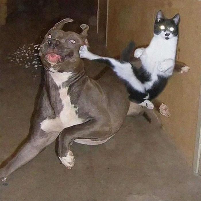 Фото №2 - 20 мемных котов, похожих на известных режиссеров