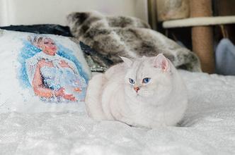 Фото №4 - «Где шесть, там и семь»: кошкин дом Наталии Гулькиной