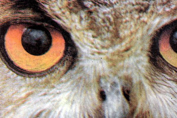 Фото №1 - Желтый глаз