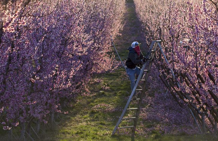 Фото №1 - Долина фруктов