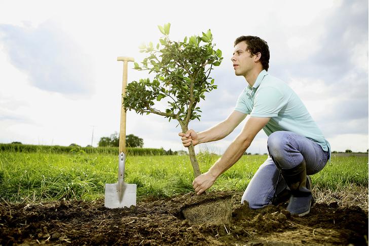 Фото №1 - Как быстро вырастить дерево, а то и целый сад