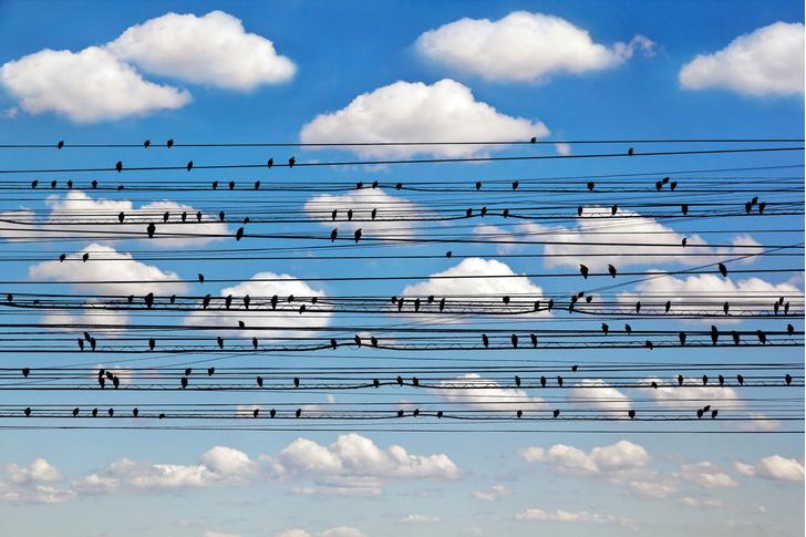 Фото №1 - В Москве пересчитали птиц