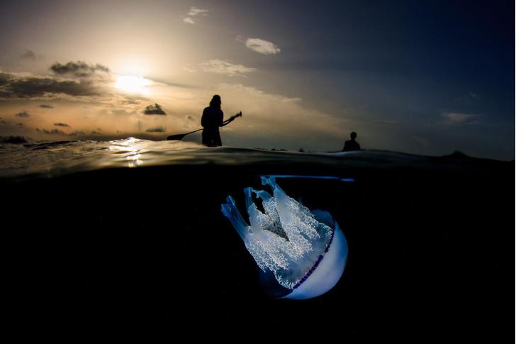 Фото №1 - Гигантская медуза