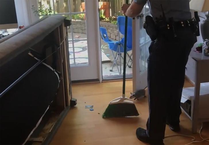 Фото №1 - В США смешной опоссум залез в диван к семейной паре и его пришлось изгонять с помощью полиции (видео)