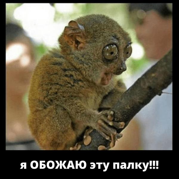 Фото №15 - Милота и угар: 20 дико ржачных мемов про животных