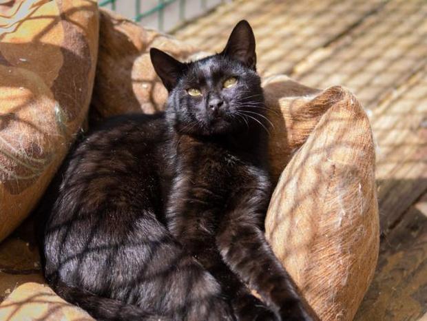 Фото №2 - Котопёс недели: кот Байкал и собака Гайка ищут дом