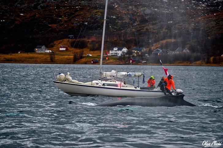 Фото №6 - Дивный север Норвегии