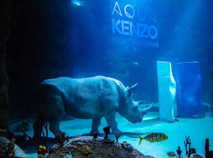 Фото №1 - Что за зверь? В «Москвариуме» теперь можно посмотреть на носорога