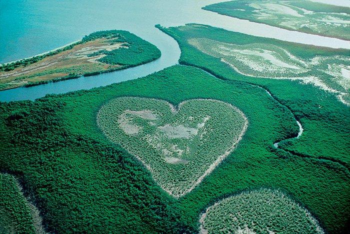 Фото №1 - Место дня. Мангровый лес в Новой Каледонии