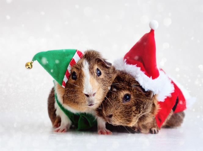 Фото №12 - Вырядился: забавные новогодние наряды домашних питомцев