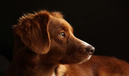 Фото №1 - В Норвегии собаки массово гибнут от неизвестной болезни. Может ли она быть опасной для людей?