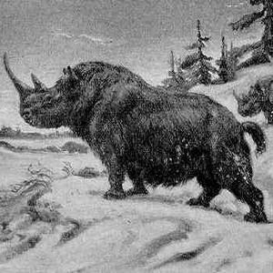 Фото №1 - Украденного носорога нашли на обочине