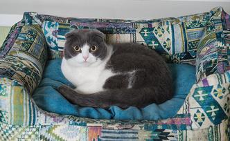 Фото №3 - «Где шесть, там и семь»: кошкин дом Наталии Гулькиной