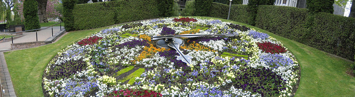 Фото №1 - Зеленые часы и барометры: растения, которые можно использовать как научные приборы