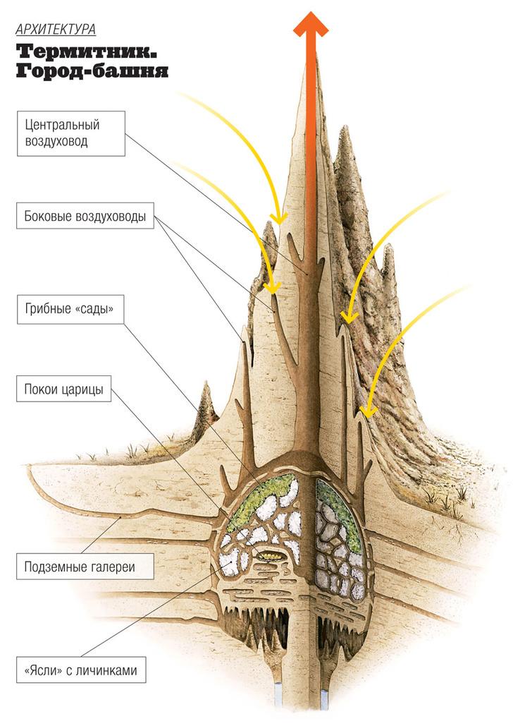 Фото №5 - Древние архитекторы: в чем термиты превзошли человека