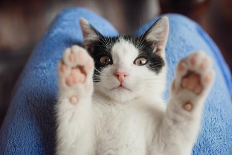 Фото №6 - Тест: Выбери котика, а мы скажем, как ты проведешь выходные