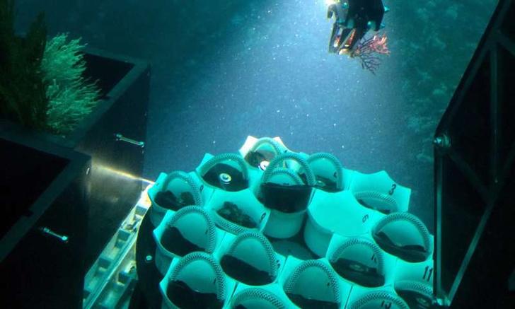 Фото №1 - В Панаме обнаружили новый вид кораллов, предпочитающих темноту