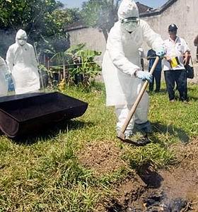 Фото №1 - Птичий грипп взял курс на пандемию