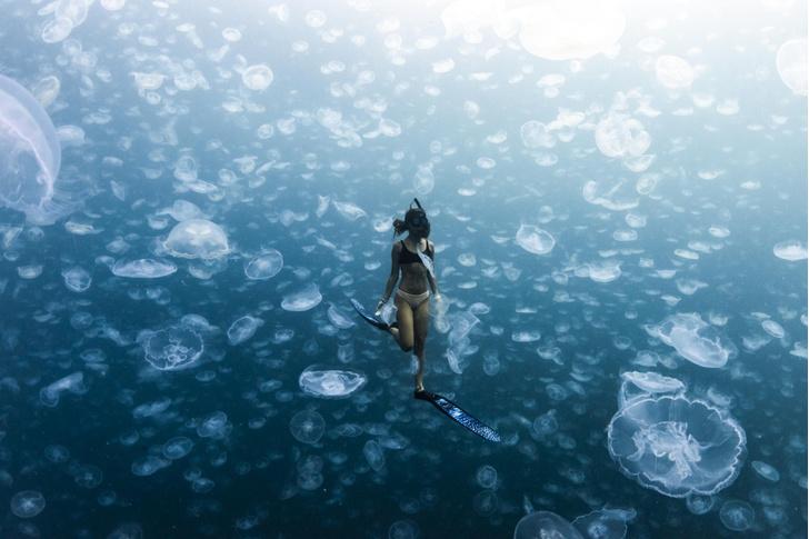 Фото №1 - Заплыв с медузами